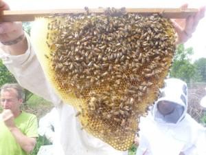 bijen001