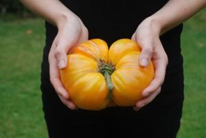 gewichtige tomaat