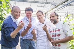 Dominique Persoone, Wim Lybaert en Peter Lonneville proeven de eerste tomaatjes bij Philip Vermeulen